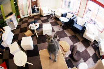 «Суп с котом»: в Британии открылось оригинальное кафе