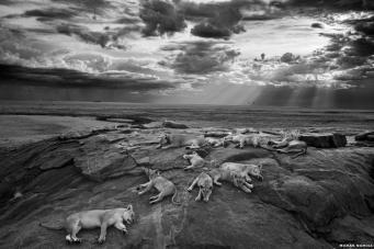Победитель конкурса Wildlife Photographer-2014