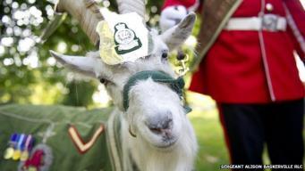 Церемониальный козел