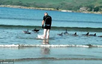 дельфины на мелководье