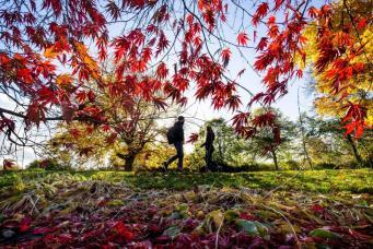 осенние листья в ботсаду Глазго