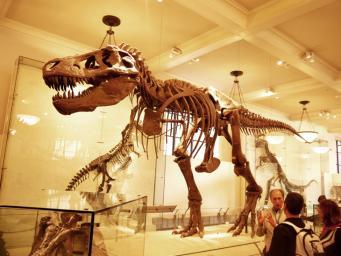 Динозавры не вымерли, они превратились в птиц – ученые из Великобритании