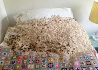 осиное гнездо в спальне