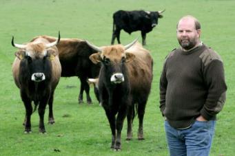 Коровы породы Гек