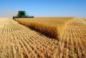 Великобритания: экспорт пшеницы будет самым низким за последние 35 лет