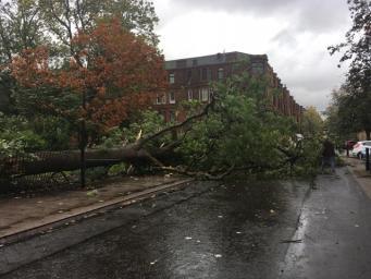упавшее дерево в Глазго