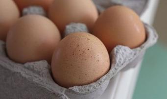 куриные яйца - источник заражения сальмонеллой