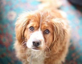 Зафиксирована очередная вспышка смертельного заболевания собак в Британии