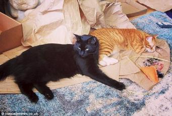 Британские ученые определили  пять кошачьих темпераментов фото:dailymail.co.uk