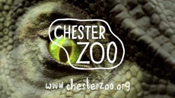 Честерский зоопарк получил чудесные «подарки»  на Рождество