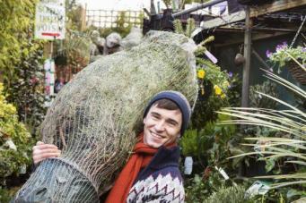 Как купить натуральную елку в Великобритании и не пожалеть об этом