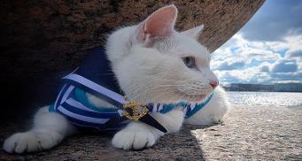 Эрмитажный кот Ахилл признан лучшим предсказателем ЧМ-2018