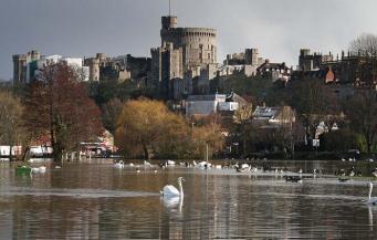 Неизвестные устроили охоту на королевских лебедей на реке Темзе