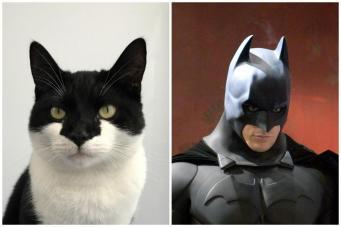 Лондонский беспородный кот-бэтмен ищет хозяев  фото:standard.co.uk