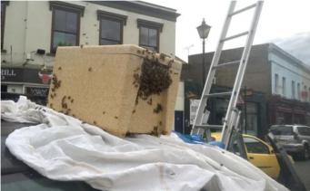 Огромный рой пчел навел панику в Гринвиче