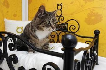 Пятизвездочный отель для кошек в Барнете вызвал негодование местных жителей фото:standard.co.uk
