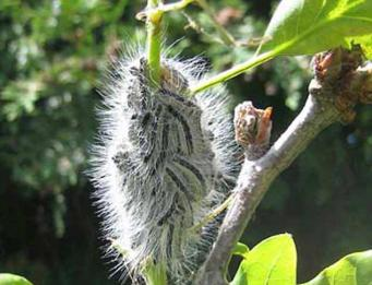 Нашествие высокотоксичных насекомых наблюдается на юго-востоке Англии