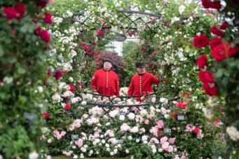 Chelsea Flower Show-2018: Яркие и опасные экспонаты выставки