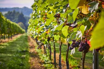 Английские виноделы пообещали хороший год