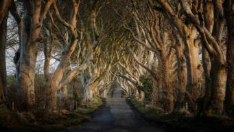Дорога в Антриме стала туристическим аттракционом благодаря «Игре престолов» фото:bbc