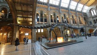 Диплодок из лондонского Музея естествознания отправился в турне по стране