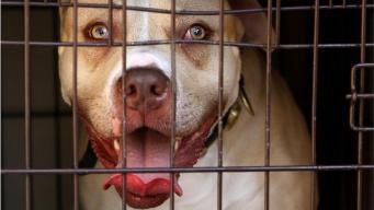 Британский парламент пересмотрит закон об опасных породах собак