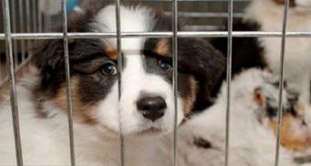 Британским магазинам запретят продавать котят и щенят