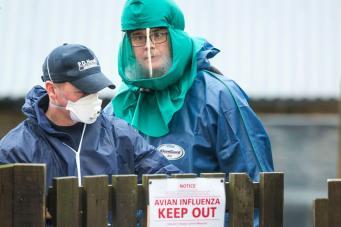 В Шотландии объявлена угроза распространения птичьего гриппа фото:dailyrecord.co.uk
