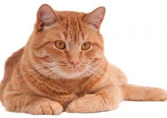 В Ипсвиче кот вернулся к хозяину после десятилетнего отсутствия