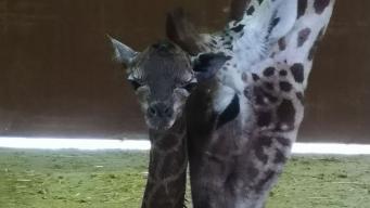 Йоркширский зоопарк получил особенный подарок на Рождество