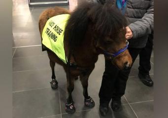 В Великобритании зарегистрирована первая лошадь-поводырь