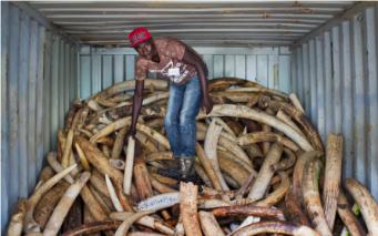 В Великобритании запретят торговлю слоновой костью