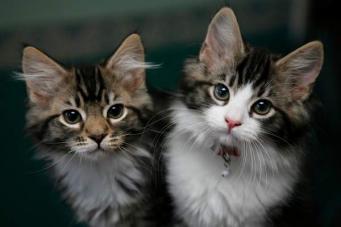 Британским зоомагазинам запретили продавать котят и щенков