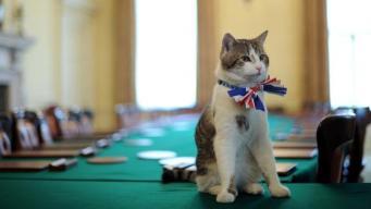 Вестминстерский дворец может пополнить штат технических сотрудников котами