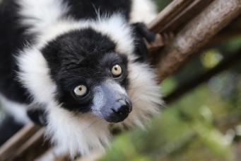 Лондонский зоопарк откроет вечерние экскурсии в летнем сезоне