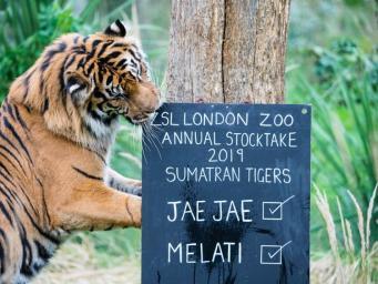 В Лондонском зоопарке начался ежегодный учет животных