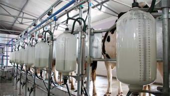 Британским потребителям грозит дефицит сливочного масла и сливок фото:farmingUK
