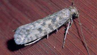 Теплая погода в Англии спровоцировала обильный выплод вредоносных насекомых фото:skynews