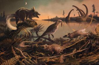 Самые древние доисторические останки млекопитающего обнаружены  в Дорсете