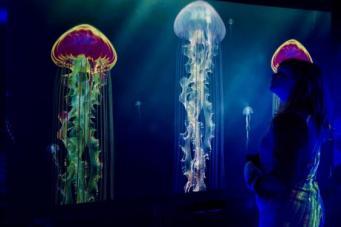 В лондонском Аквариуме откроется выставка медуз фото:standard.co.uk