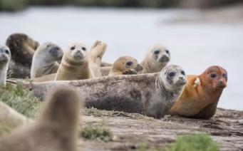 Лондонские зоологи анонсировали ежегодный учет тюленей в Темзе