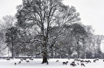 фото: Шторм Кэролайн ночью наметет снежные заносы в Северной Англии и Уэльсе