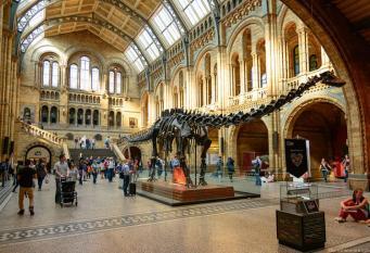Музей естествознания собирается демонтировать скелет динозавра Диппи