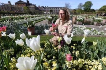 Мемориальный сад принцессы Дианы открыт для посещений в Кенсингтонском парке фото:standard.co.uk