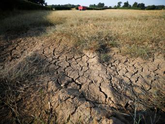 Британские фермеры попросили правительство о защите  от последствий засухи