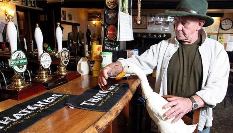 «Самая пьяная утка Британии» подралась с собакой в пабе