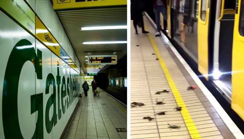 крабы атакуют метро
