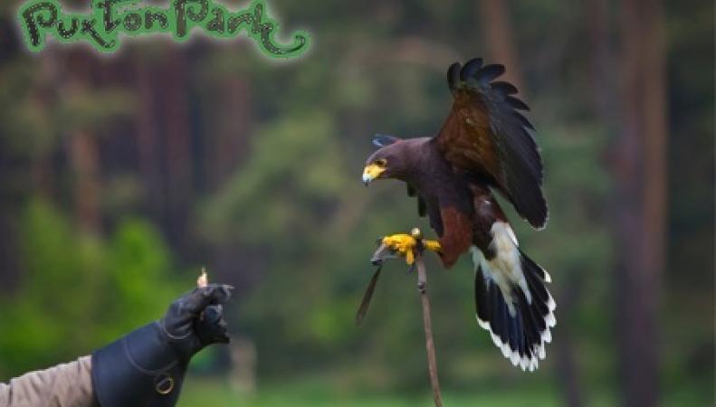аттракцион соколиной охоты