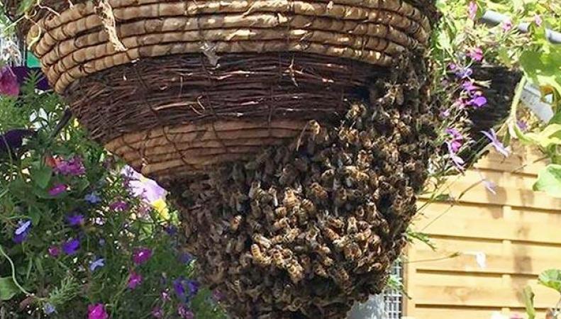 рой пчел в цветочном магазине