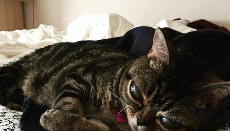 Кошка из Британии, покорившая Интернет